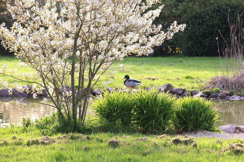 Le jardin au clos d 39 alb tre for Le jardin clos